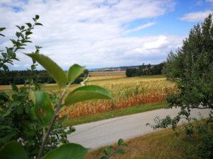 Warenterminbörse: Handel mit Naturprodukten, wie Mais.